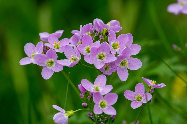 coucou flower, fleurs des champs, blouse