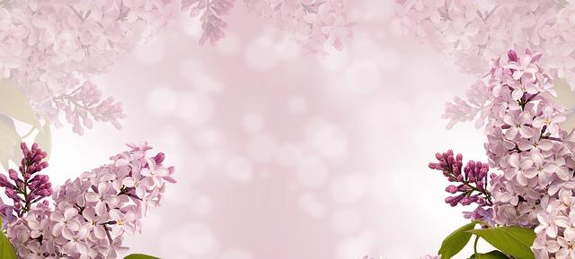 nature, fleur, flore