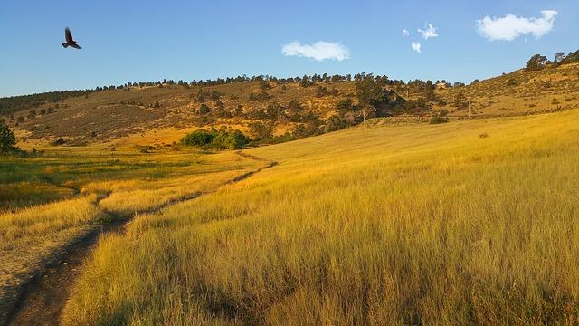 zone naturelle pineridge, faucon, vol